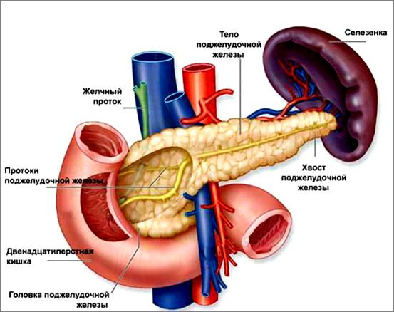 как похудеть принимая гормоны щитовидной железы